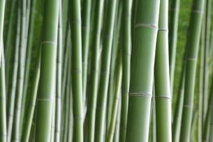竹林の写真素材 [FYI00265361]