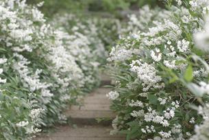 白花の素材 [FYI00265590]