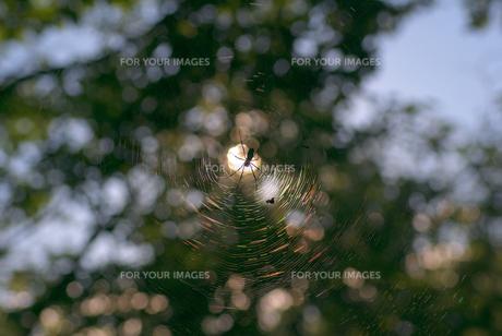 spider netの写真素材 [FYI00265595]