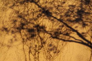 脈の写真素材 [FYI00265599]