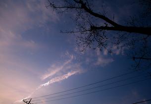 夕焼け空と電線と木の素材 [FYI00265605]