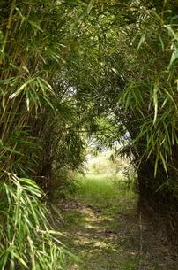 竹のトンネルの写真素材 [FYI00265704]
