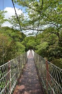 つり橋の写真素材 [FYI00265723]