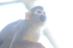光の中の猿の写真素材 [FYI00265817]