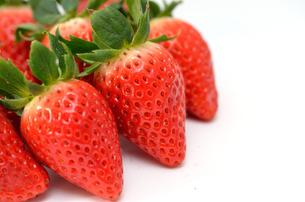 苺の写真素材 [FYI00265861]