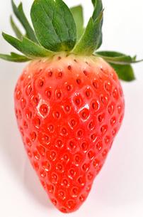 苺の写真素材 [FYI00265878]