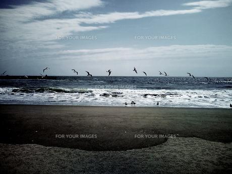 カモメと海の写真素材 [FYI00266131]