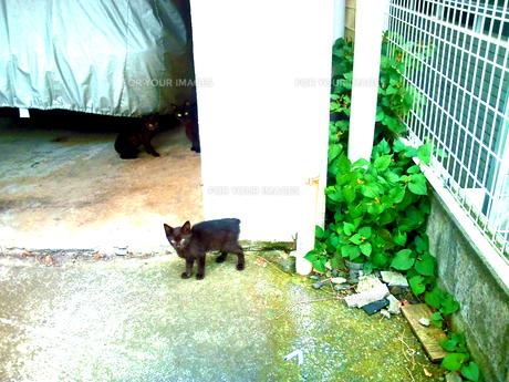 猫の写真素材 [FYI00266134]