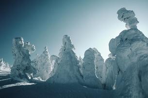 樹氷の写真素材 [FYI00266493]