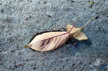 霜と落ち葉の写真素材 [FYI00266626]