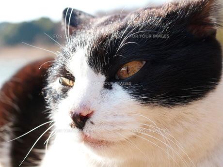 猫 その2の写真素材 [FYI00266741]