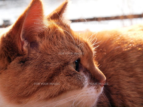 猫 その3の写真素材 [FYI00266744]
