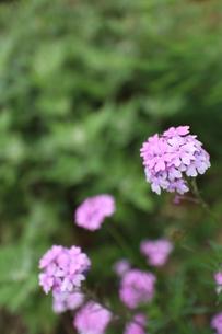 梅雨の草花の素材 [FYI00267142]