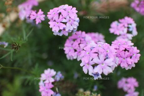 梅雨の草花2の素材 [FYI00267149]