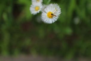 梅雨の草花6の素材 [FYI00267158]