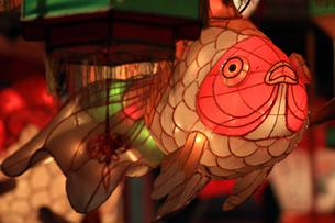 金魚の写真素材 [FYI00267505]
