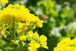 春の写真素材 [FYI00268261]