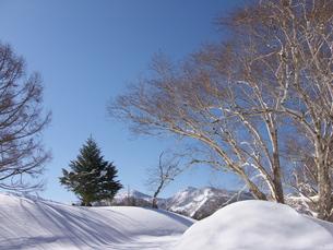 雪山の朝の写真素材 [FYI00268262]