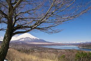 富士山の写真素材 [FYI00268269]