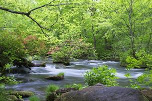 春の奥入瀬の写真素材 [FYI00268323]