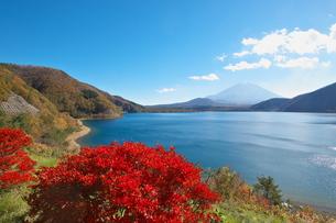 本栖湖の写真素材 [FYI00268384]