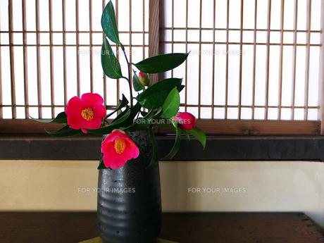 花瓶に生けた椿の写真素材 [FYI00268871]