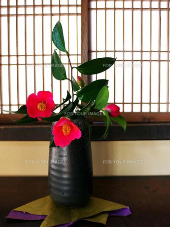 椿の生け花の写真素材 [FYI00268883]