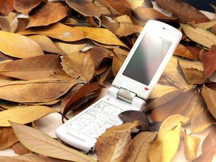 枯葉と携帯電話の写真素材 [FYI00268908]