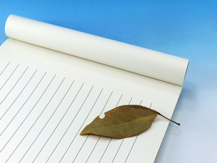 落ち葉と便箋の写真素材 [FYI00268919]
