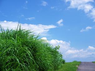 夏草と青空の写真素材 [FYI00268921]