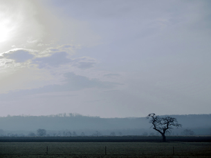 釧路湿原の大木の写真素材 [FYI00268933]