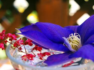 クレマチスのテーブル花の写真素材 [FYI00268970]