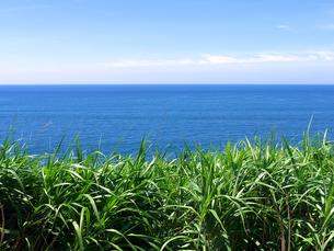 増穂浦海岸の草むらと水平線の写真素材 [FYI00269074]