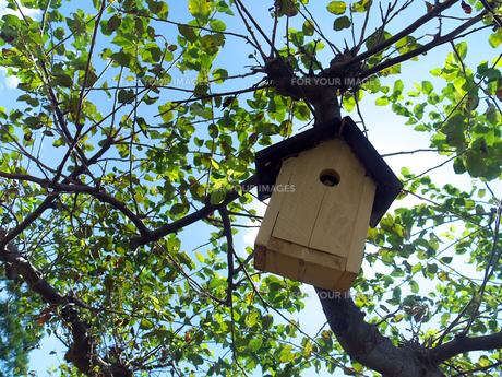 小鳥の巣箱の素材 [FYI00269092]