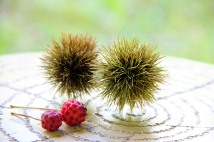 栗とやまぼうしの果実の写真素材 [FYI00269121]