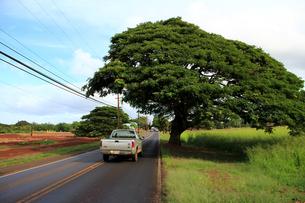 カメハメハ・ハイウェイの大木の写真素材 [FYI00269244]