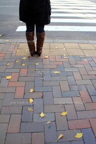 秋の交差点の写真素材 [FYI00269327]