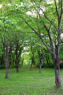 新緑の林間の写真素材 [FYI00269463]