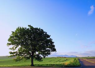 セブンスターの木と道の素材 [FYI00269504]