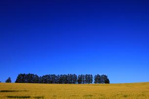 マイルドセブンの丘の写真素材 [FYI00269513]