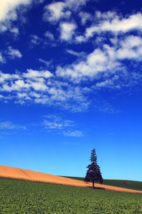 クリスマスツリーの木の写真素材 [FYI00269522]