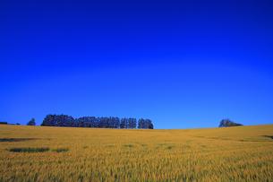 マイルドセブンの丘の遠景の写真素材 [FYI00269526]