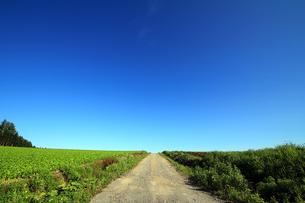 畑の中の一本道の写真素材 [FYI00269528]