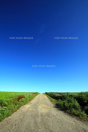 畑の中の一本道と地平線の写真素材 [FYI00269540]