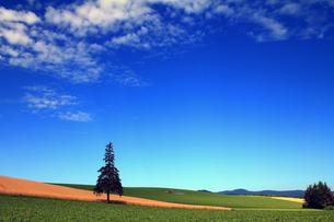 クリスマスツリーの木・遠景の写真素材 [FYI00269543]