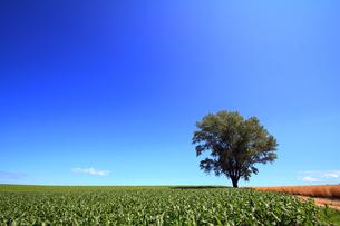 哲学の木の写真素材 [FYI00269552]