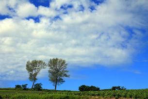 パフィーの木の写真素材 [FYI00269555]