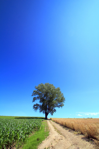哲学の木と道の写真素材 [FYI00269558]