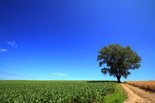 道と哲学の木の写真素材 [FYI00269565]
