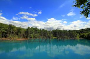 白金碧い池の写真素材 [FYI00269570]